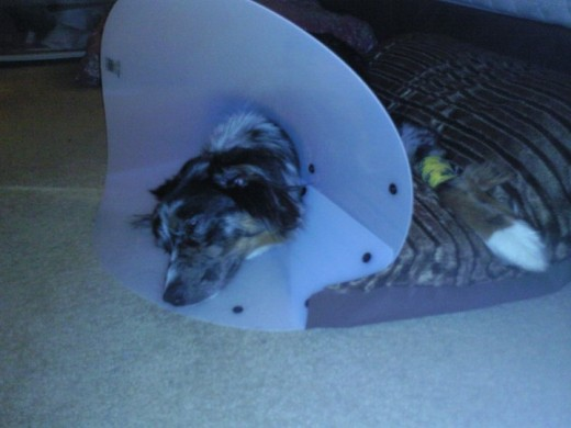 I got spayed.. Not a happy camper!