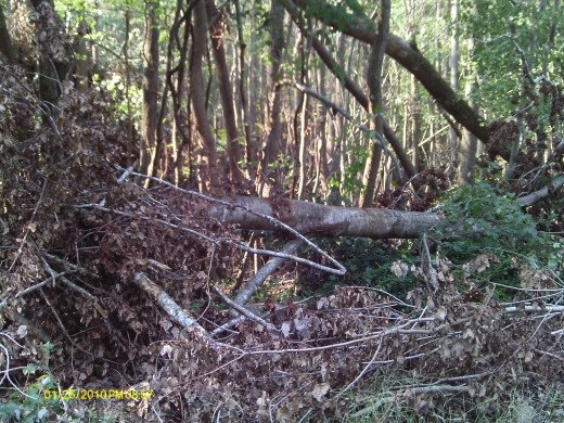 Some of what remains of the tree that blocked the road I was on once it was cleared.