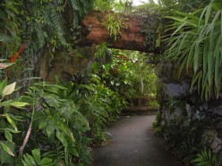 Photo 3 - A Path in the Climatron.  Its very lush and tropical.
