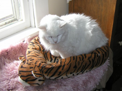 Basil in Tiger-his favorite bed