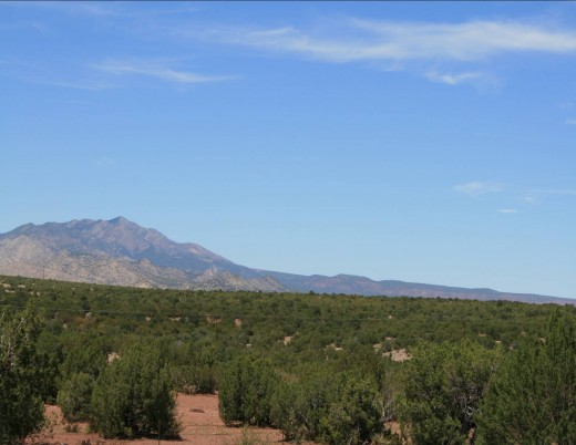Thousands of acres of Pinon trees.  Pinon nuts are a delicacy.