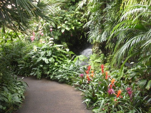 Taken in a tropical conservatory.