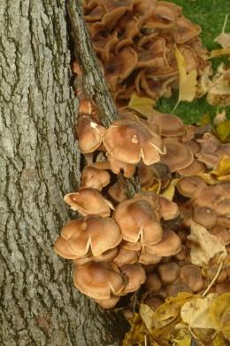 Mushroom Subway