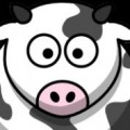 Five One Cows...noted follower...and followee...