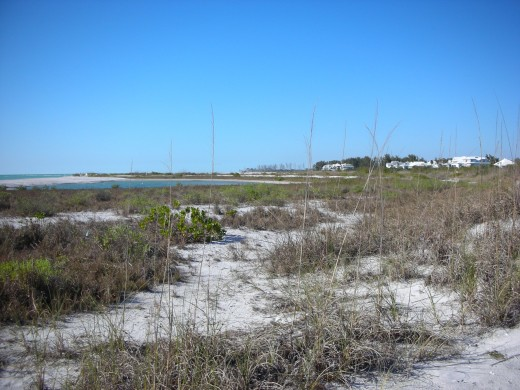 Seabird nesting area on Don Pedro Island
