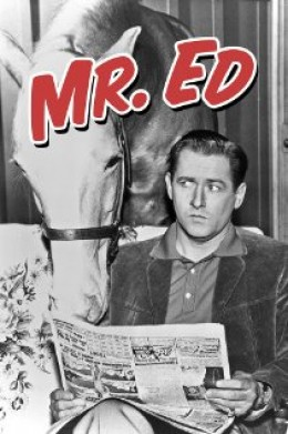 "MR. ED, LEFT, AND ALLAN YOUNG, RIGHT, CHEVY CHASE CAN BE WILBUR POST, ED'S SON'S OWNER IN THE ""SON OF MR. ED"" REMAKE. BRAD GARRETT CAN BE ""ED'S"" VOICE."