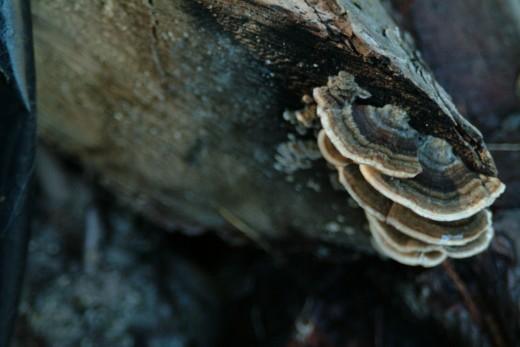 Fans of Mushroom