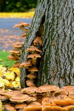 Tree Invading Mushrooms