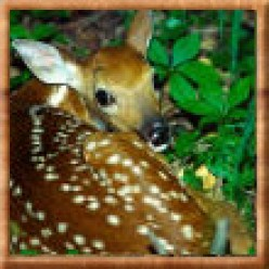 My Trip to The Deer Haven Mini Zoo