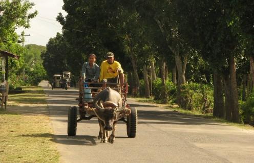 Philippine Carabao (Water Buffalo) Cart