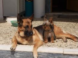 Roxy and Rascal