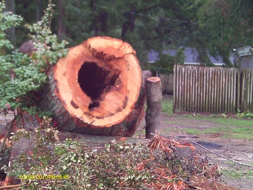 The size of the tree that fell on the neighbor's house.