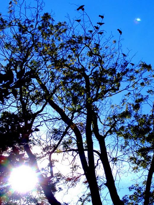 Shinn Park in Fremont California