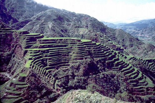 Banaue Rice Terraces in the Philippines Where Traditional Landraces Have Been Grown for Thousands of Years.