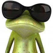 fertilefrog profile image