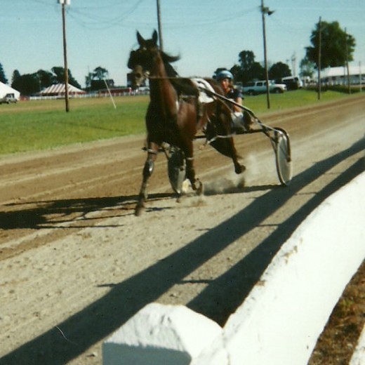 A harness racing horse warms up for the mile.