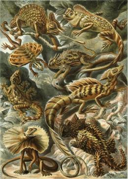 """Lacertilia"""", from Ernst Haeckel's Kunstformen der Natur, 1904"""