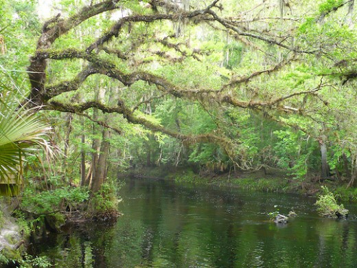 Hillsborough River State. Photo by ParkWes Bryant, CC BY-SA 2.0,  flickr.com/photos/vcalzone/4548936756/in/set-72157623923217796