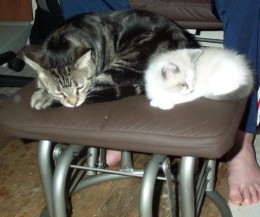 Neo (Knut) and Tabby resting.