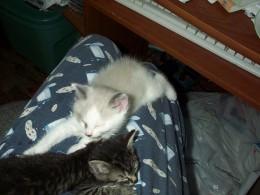 Happy, sleeping kittens with full tummies.