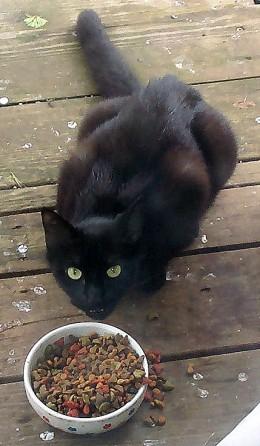 Tom Kitty eating