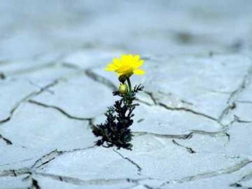 Yellow tundra flower