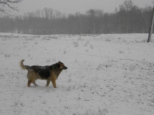 Snow Traveler II (photo by Vicki Parker)