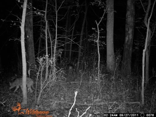 Photo courtesy of DeerTrackingCameras.com.