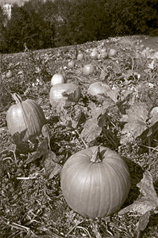 The remains of a boy missing since 1971 were recovered from the Schroeder family pumpkin patch.