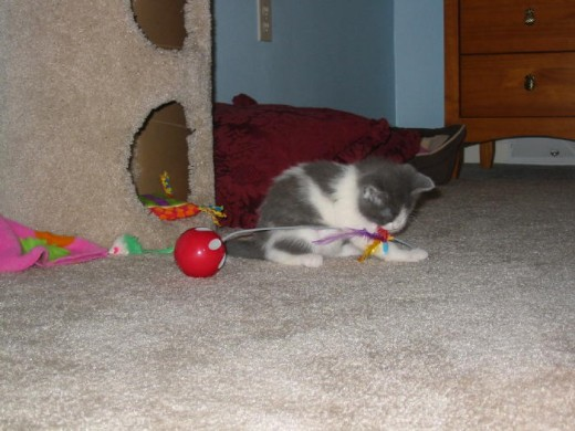 I noticed in a lot of Dixie's kitten pictures the little pink blanket was usually there!