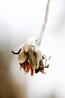 Wabi Sabi Flower