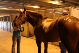 Photo is by Brandi Jessen. Zero getting his hip number at the Extreme Mustang Makeover