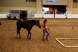 Photo by Brandi Jessen. Zero-in hand portion of Extreme Mustang Makeover