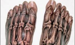 3D Feet Bones