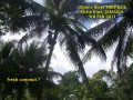 JAMAICA, At Dunn's River Falls