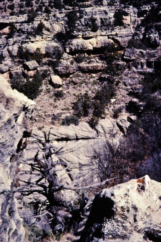 Walnut Canyon - Looking across at cliff dwellings on the other side of the canyon.