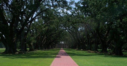 Classic image of the walk up to Oak Alley Plantation.