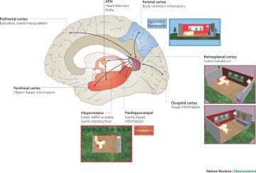 Spatial memory map of the brain.
