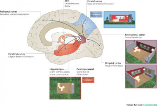 Spatial memory map of the brain.