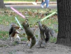 Texas A&M Fightin' Squirrels Flag Football Plays