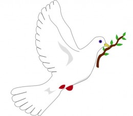 Pigeon, a symbol of love, peace and tranquility