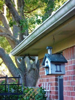 See papa bird keeping watch from the roof over mama bird who is peaking her head out of the birdhouse?
