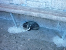 This cat was having a cat nap under a bench at a bus stop in Hong Kong. Wouldn't it be nice if we could always have this contentment knowing Jesus loves us and is always there for us.