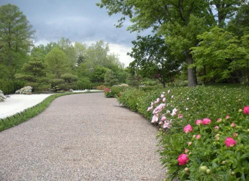 Photo 7 - Peonies growing along the walkway.