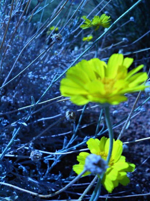 October is in bloom at the Pittman Wash