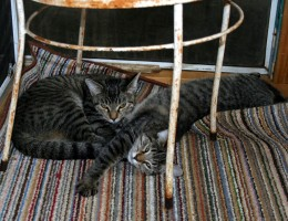 These are Muffin and Pancake..brother and sister who are also rescue kitties