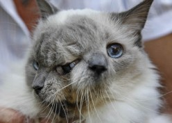Two-Faced Janus Cat