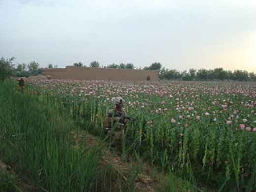 Poppy Fields in Afghanistan