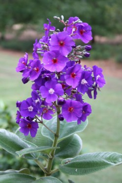 Pictures of flowers in North Carolina
