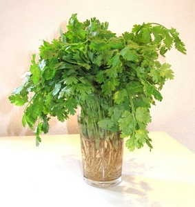 Fresh Cilantro - Photo by Alsterdrache